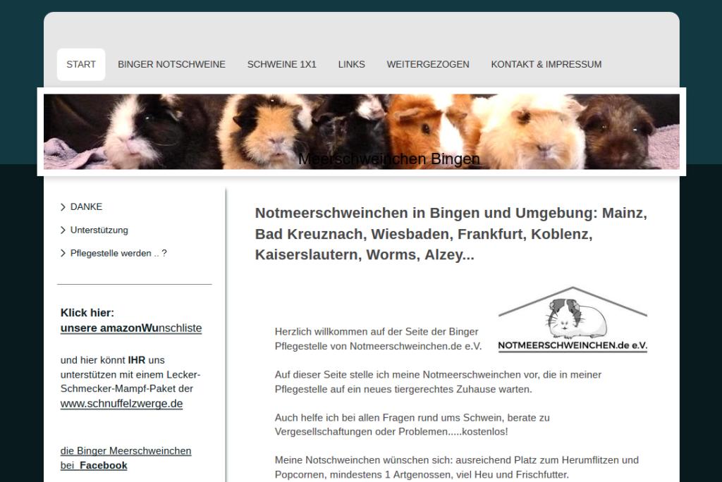 Binger Pflegestelle Von Notmeerschweinchen De E V Meerschwein Sein