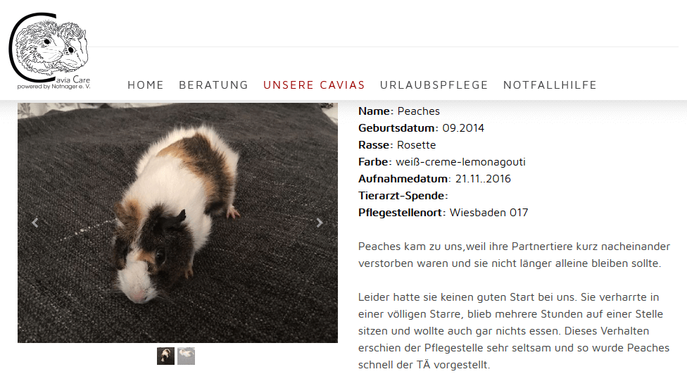 cavia-care-notstation.png