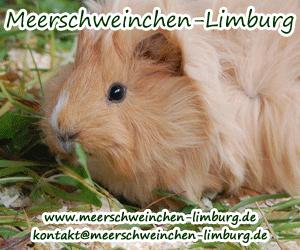 meerschweinchenlimburg.png