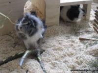 meerschweinchenhilfe-wuppertal.png.jpg