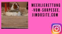 meerlierettung-vom-sorpesee-1.png