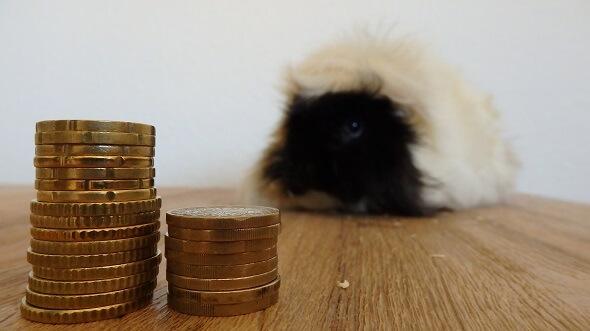 Meerschweinchen kosten