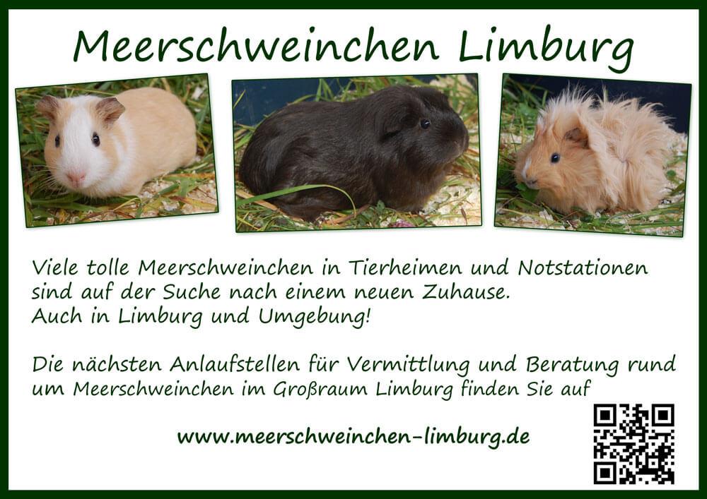Meerschweinchen Limburg