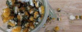 Kräuter und Blüten selber trocknen für die Winterfütterung