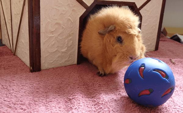 Futterball zur Bewegungsförderung