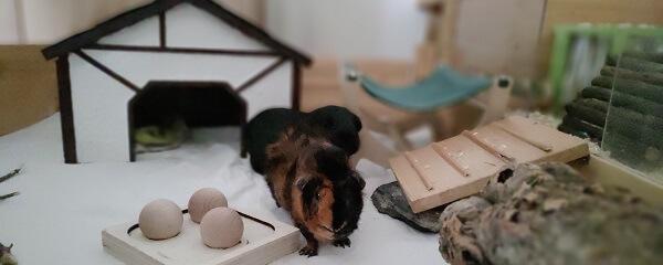 Vorbereitungen für den Einzug der ersten Meerschweinchen